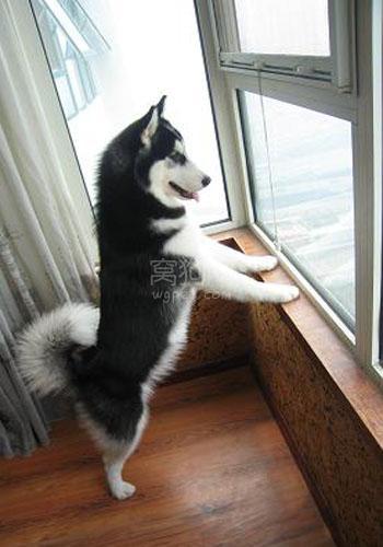 如何避免在楼道内养狗,不要惊扰众邻居 第1张